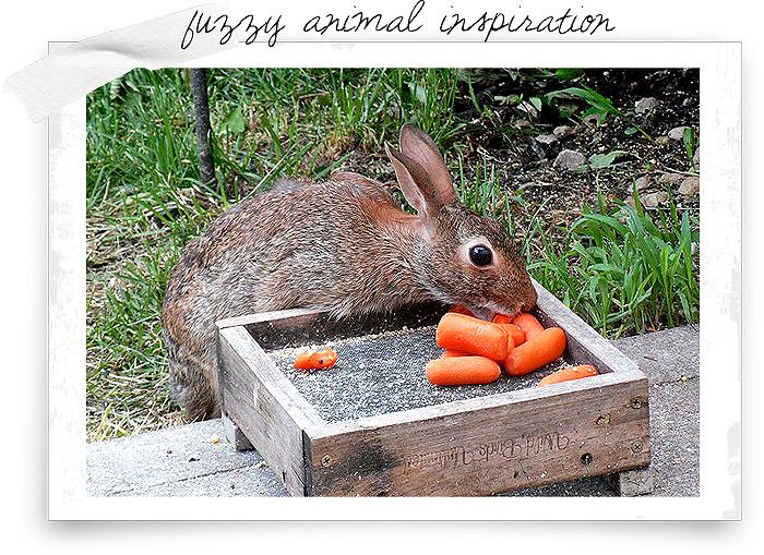 Animal-inspiration-post