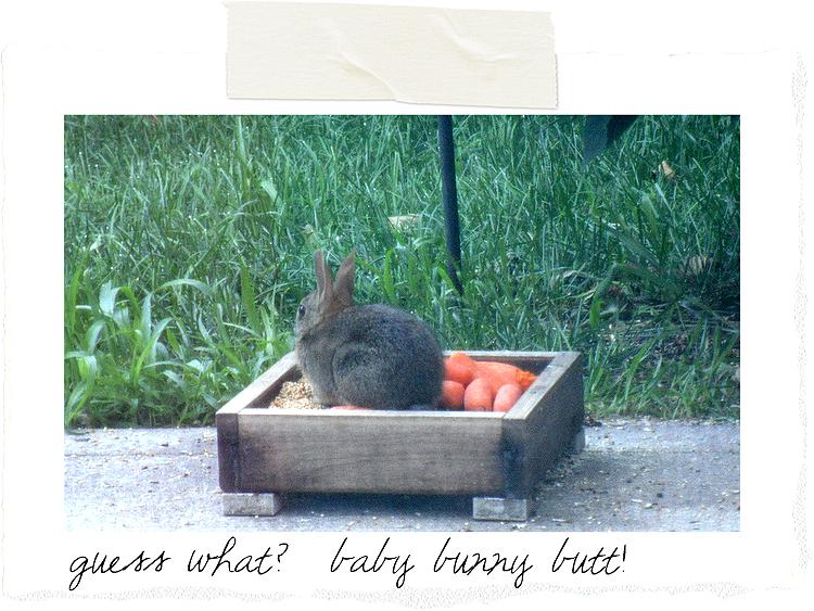 Baby-bunny-butt-3