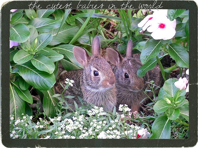My little baby bunnies in the garden